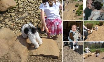 View Livy.Dog.Park