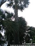 nomad4ever_java_baluran_CIMG5133.jpg