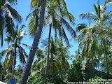 nomad4ever_philippines_malapascua_CIMG2253.jpg