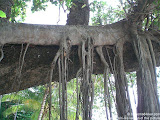 nomad4ever_thailand_phuket_CIMG0228.jpg