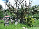 nomad4ever_indonesia_sulawesi_manado_bunaken_CIMG2497.jpg