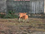 nomad4ever_indonesia_bali_life_CIMG1849.jpg