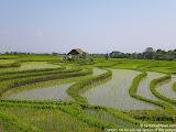 nomad4ever_indonesia_bali_landscape_CIMG1639.jpg