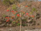nomad4ever_indonesia_bali_landscape_CIMG1722.jpg