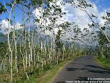 nomad4ever_indonesia_bali_landscape_CIMG1914.jpg