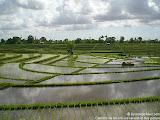 nomad4ever_indonesia_bali_landscape_CIMG2372.jpg