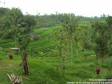 nomad4ever_bali_waterfall_hotsprings_DSCN2998.jpg