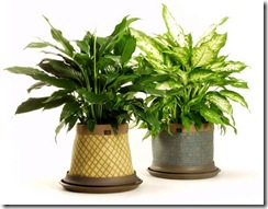 my money and savings blog - plants pot