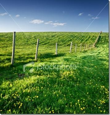 MyMoneyBlog_springtimefield1