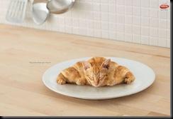 croissant-kitty