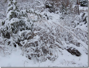 lacy snow 2