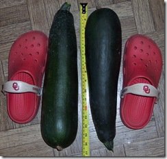 zucchini 7.15.09 005