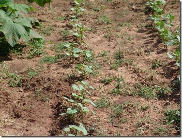 garden 2010 031