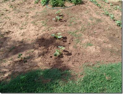 garden 2010 016