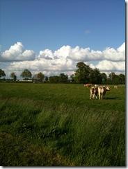 Klein Limburg 1