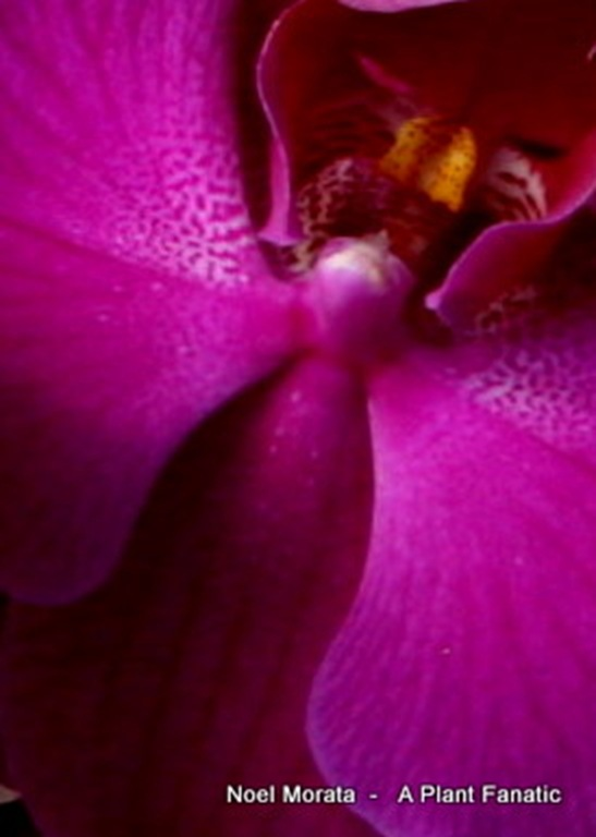 orchids6-1