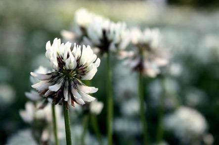 blomster13[1]