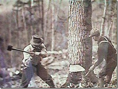 enormes árboles talados cosasdivertidas (25)