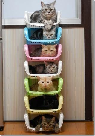 gatos en linea cosasdivertidas
