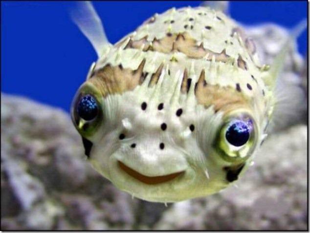 caras de pez casi humana migallinero (4)