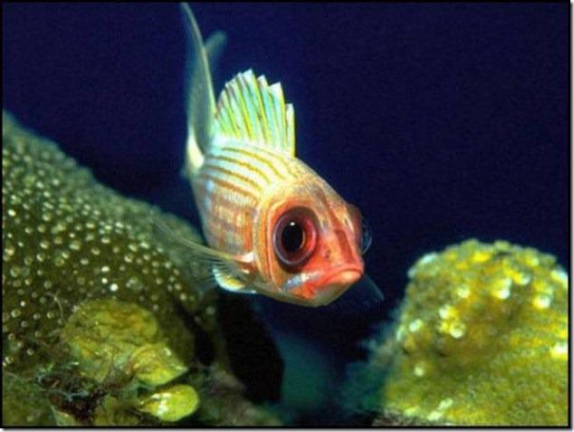 caras de pez casi humana migallinero (122)