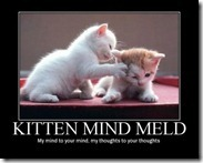 kitten_Mind_Meld
