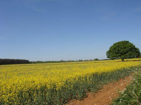 Campo em Oxfordshire