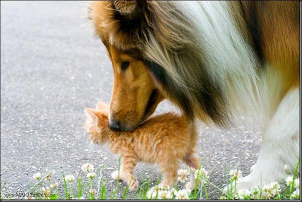 Encontro de um gatinho e um cachorro (4)
