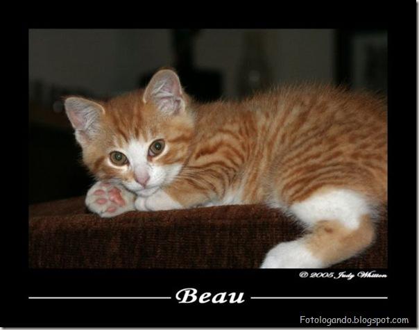 momento oinn especial gatos (88)