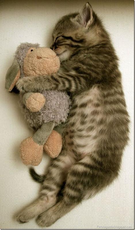 momento oinn especial gatos (109)