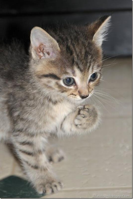 momento oinn especial gatos (107)