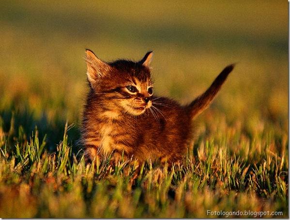 momento oinn especial gatos (94)