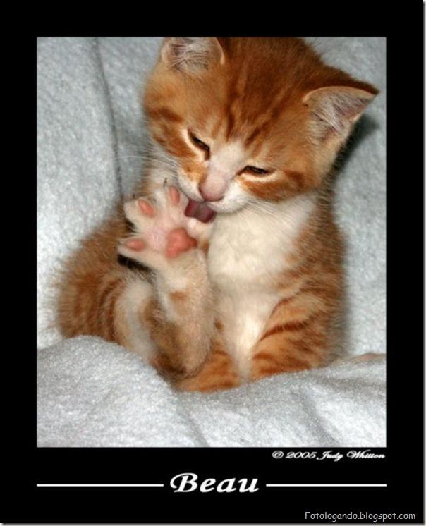 momento oinn especial gatos (87)