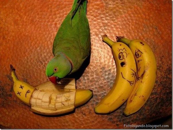 Diversão com frutas, legumes, ovos e outras coisas (133)