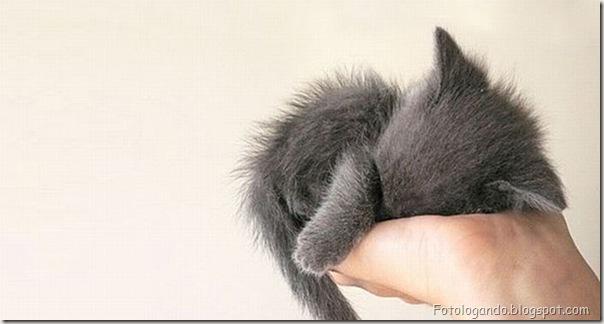 Pequeninos animais (7)