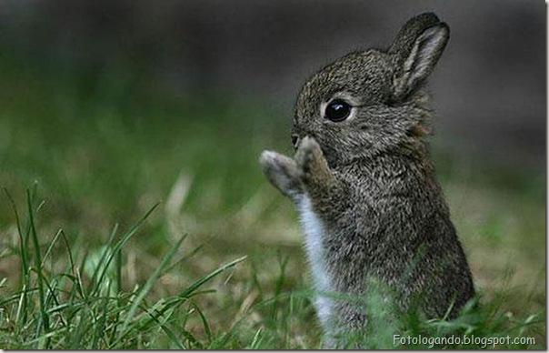Pequeninos animais (1)