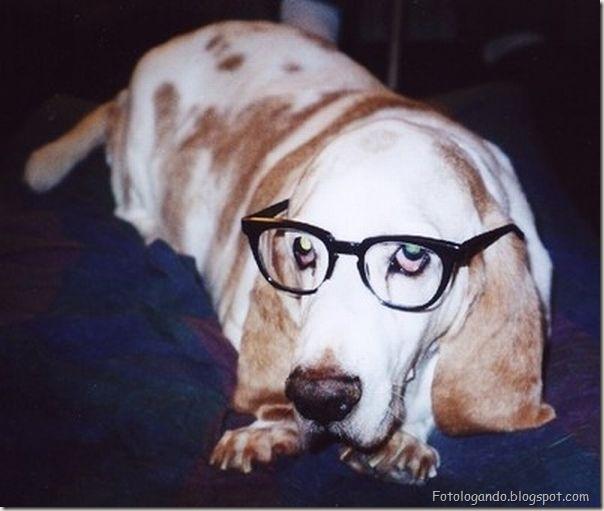 Animais de Oculos (19)