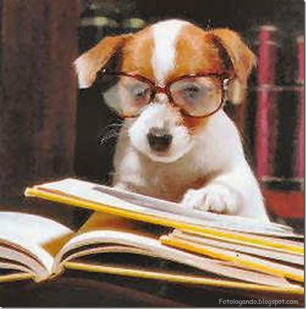 Animais de Oculos (14)