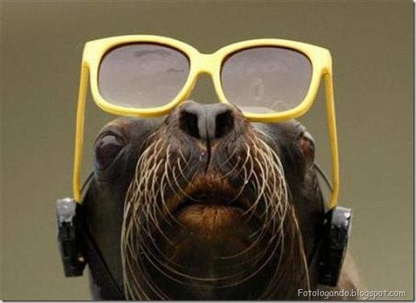 Animais de Oculos (4)