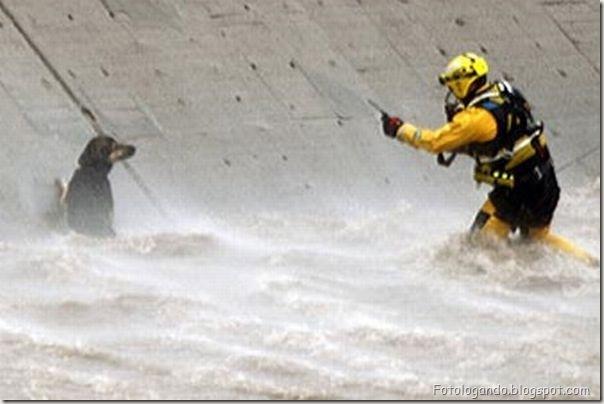 Dramático resgate de um cachorro (5)