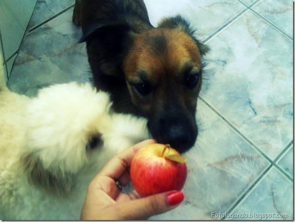 Jack e Steve - eles amam maçã