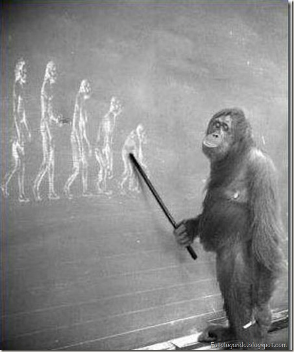 Diferentes tipos de evolução (41)