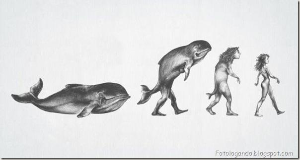 Diferentes tipos de evolução (20)