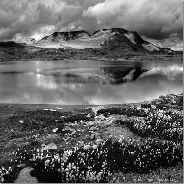 Fotos artísticas em preto e branco (7)