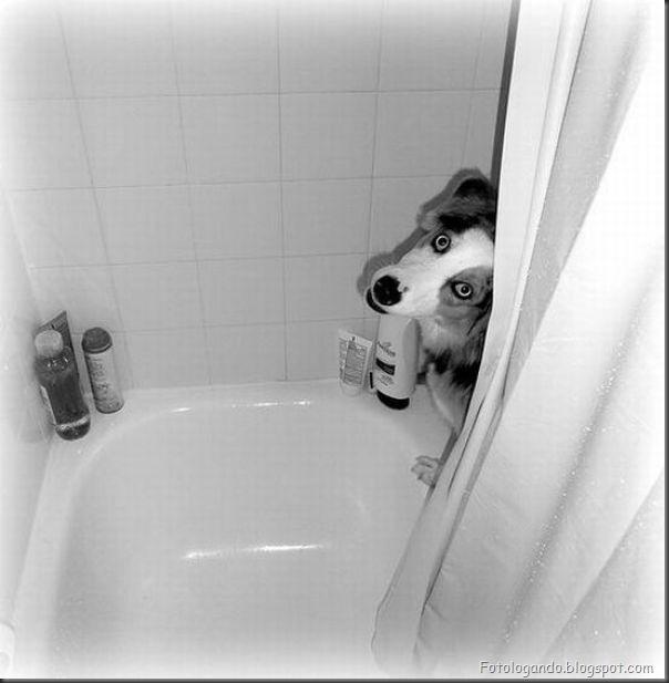 Cães no banho (10)