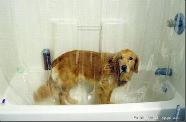Cães no banho (6)