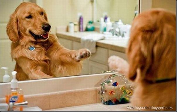 Cães no banho (2)