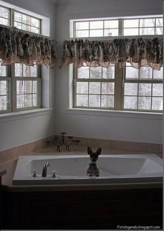 Cães no banho (24)