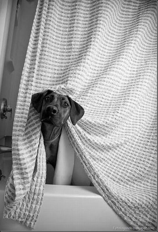 Cães no banho (23)