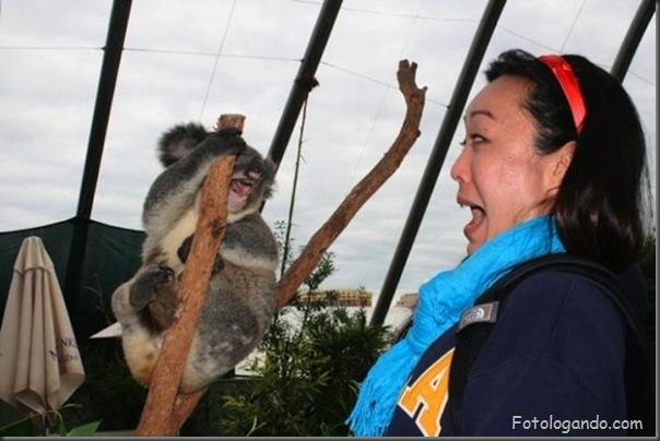 Fotos de animais no zoo capturadas no momento certo